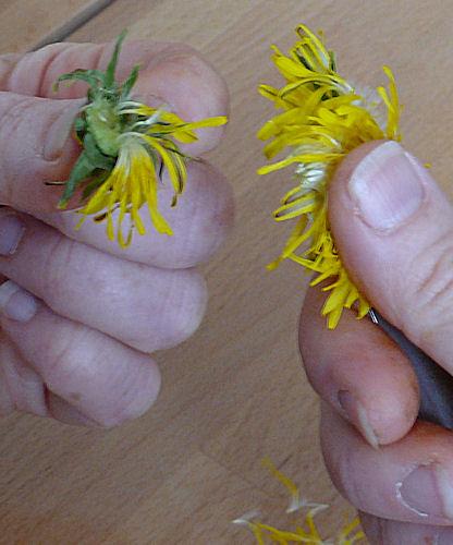 http://scrap.en.folie.free.fr/apourblog/recettes/confiture/cramaillotte/Image46.jpg