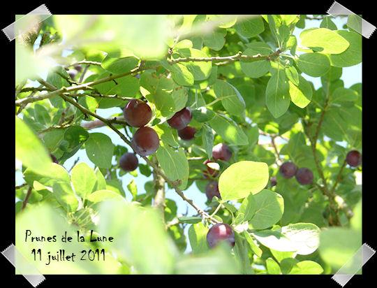 http://scrap.en.folie.free.fr/apourblog/recettes/prune/2011/Image5.jpg